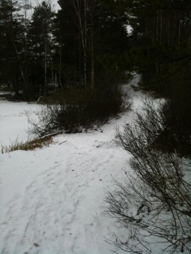 Stora Djursjön idag är inte översvämmad.