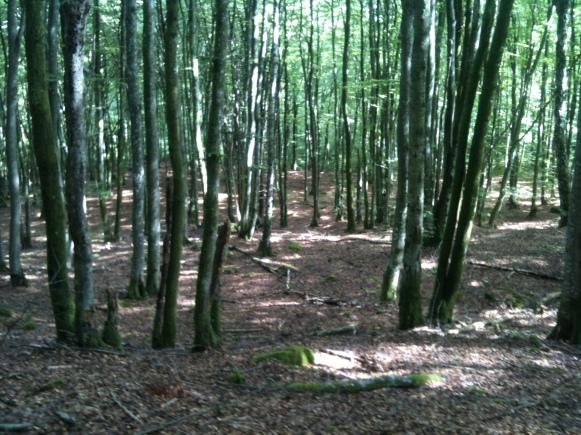 Bokskogen är fantastisk att springa och