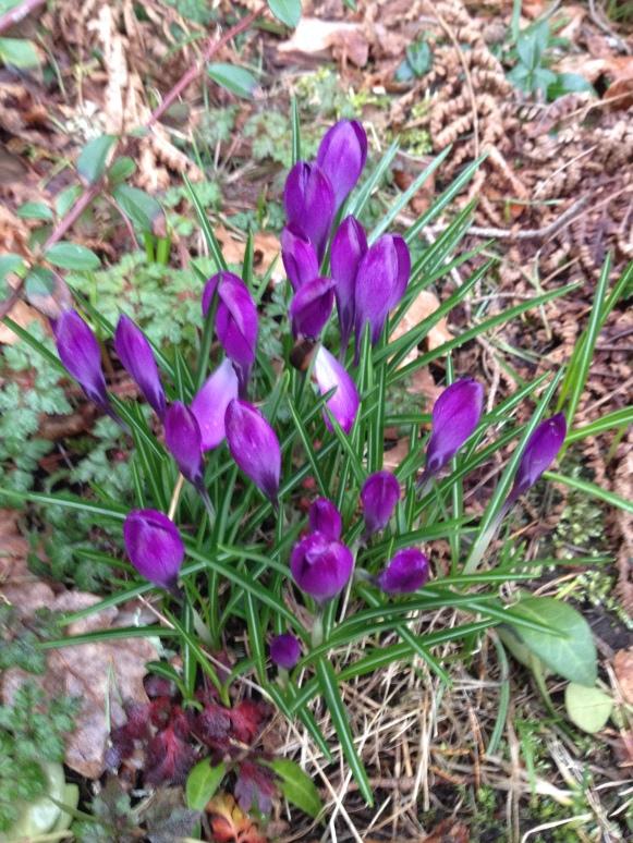 Våren här - dags för