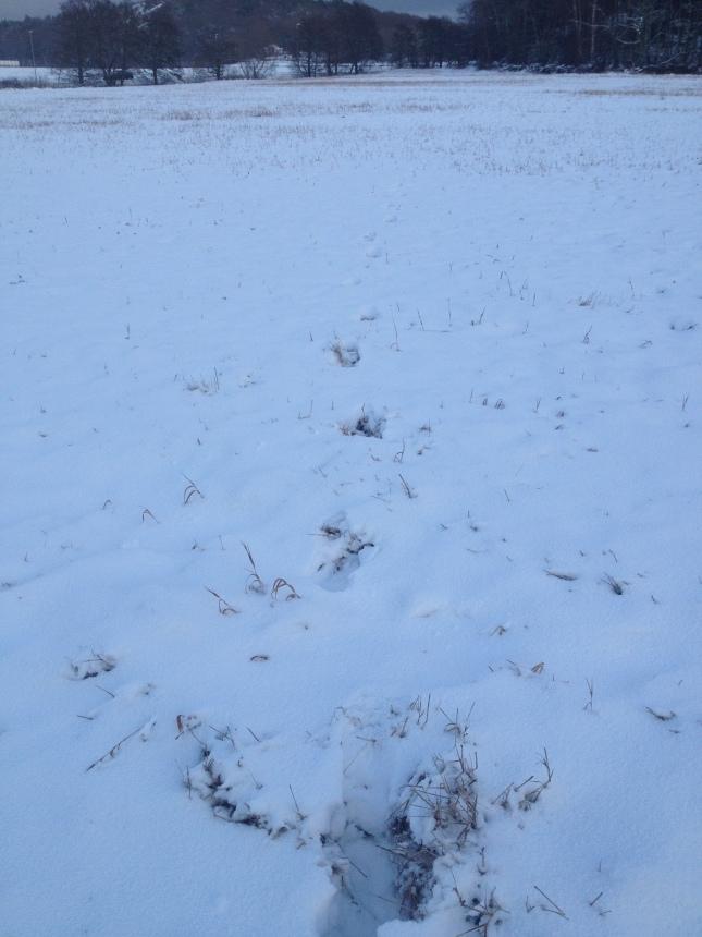 Mjukt och tyst i snön!