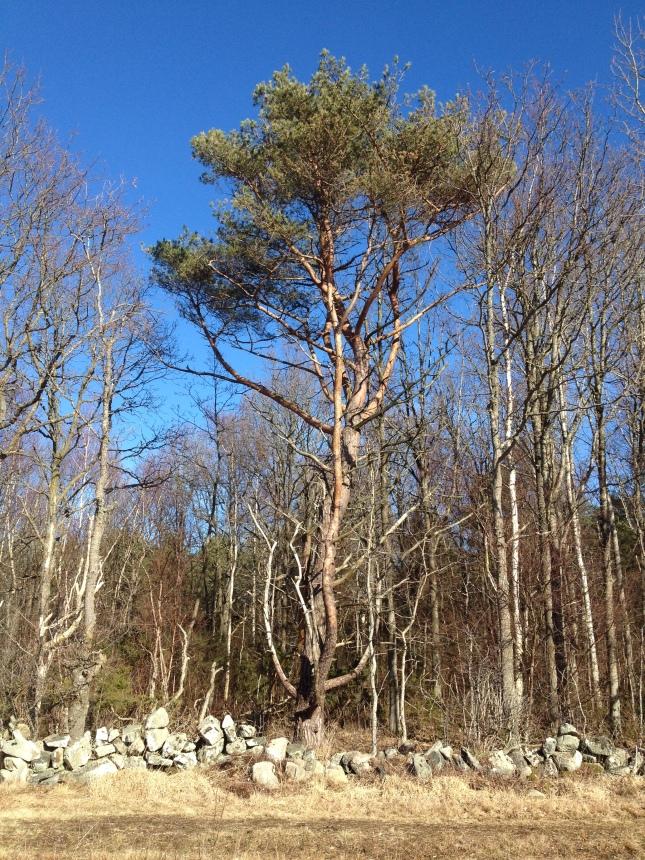 Ännu ett vårtecken - klarblå himmel!