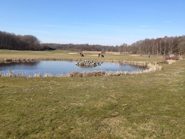 Golfbanorna är duktiga att hålla öppna landskap, här   Gräppås!