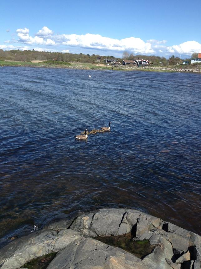 Bara fåglar i Lerkils havsbad idag!