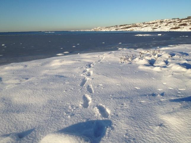 Folkhälsa är att pulsa i snön - ofta!