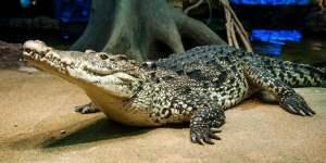Krokodl